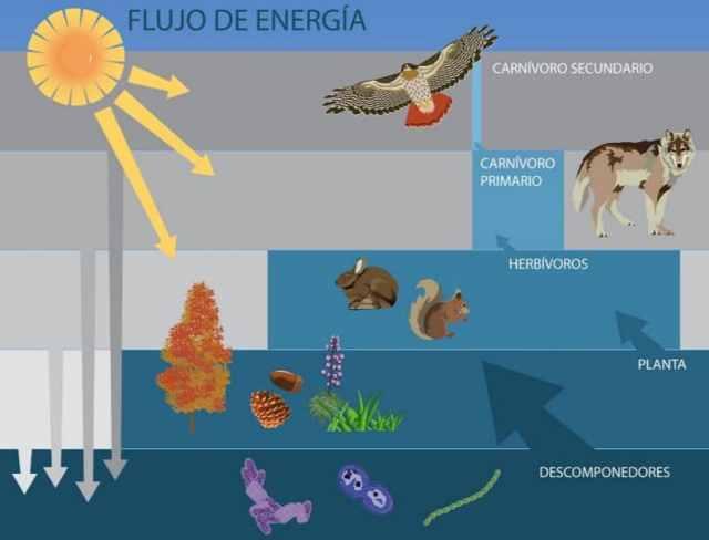 flujo de energía ecosistema
