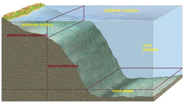 zona pelagica del oceano