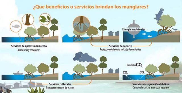 beneficios de los manglares