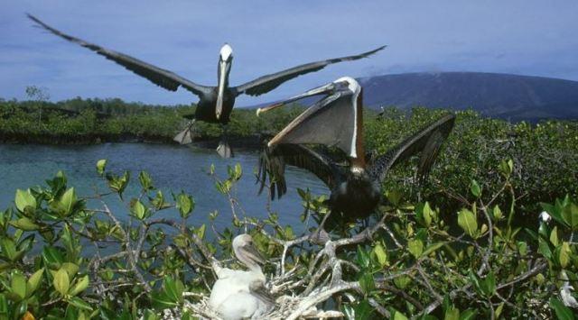 fauna del manglar
