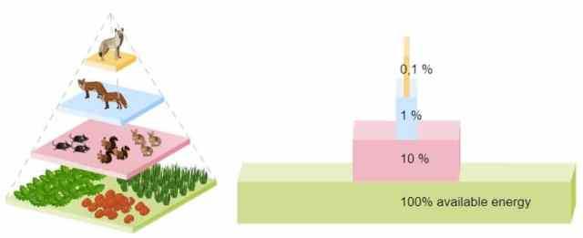 ejemplo pirámide alimenticia