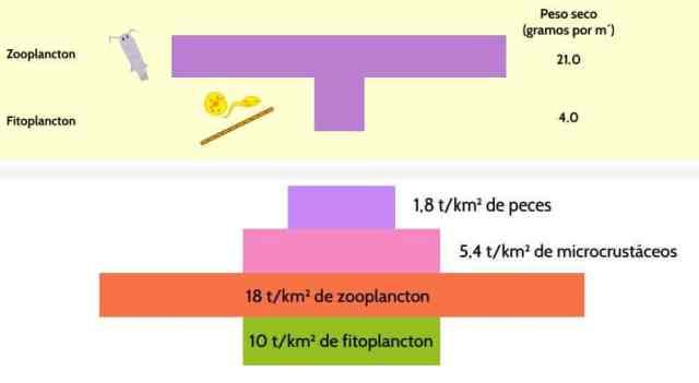 pirámide invertida de biomasa