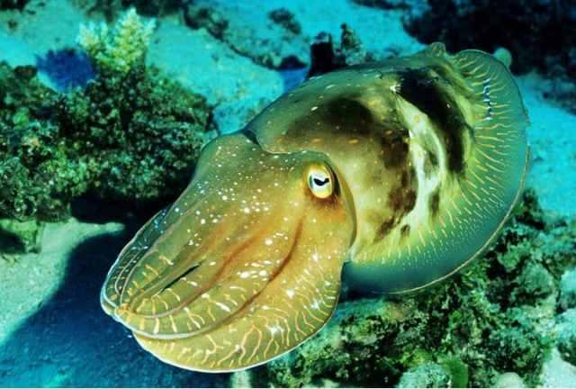 animales de mar cambian color