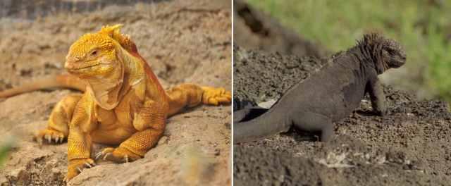 ejemplo de animal cambio color