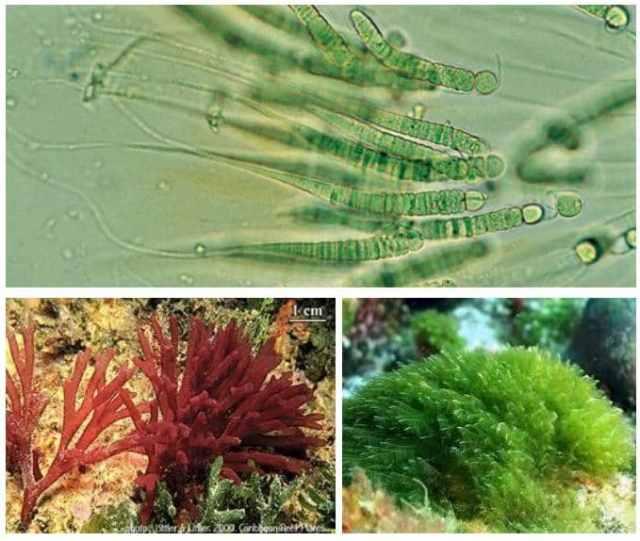 ejemplo organismos autótrofos acuáticos