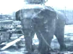 Topsy la elefanta