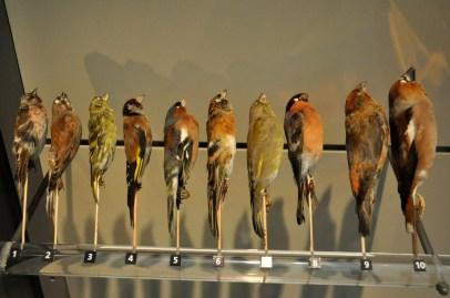 Ptaszki szaszłyczki