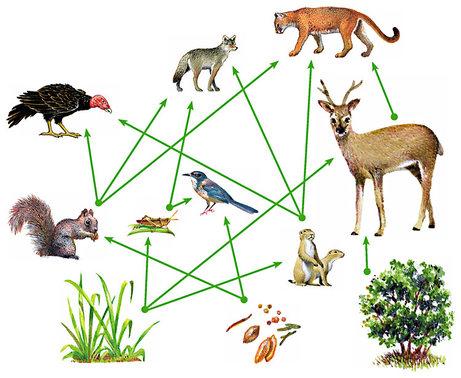 Food Web  Ecosystems