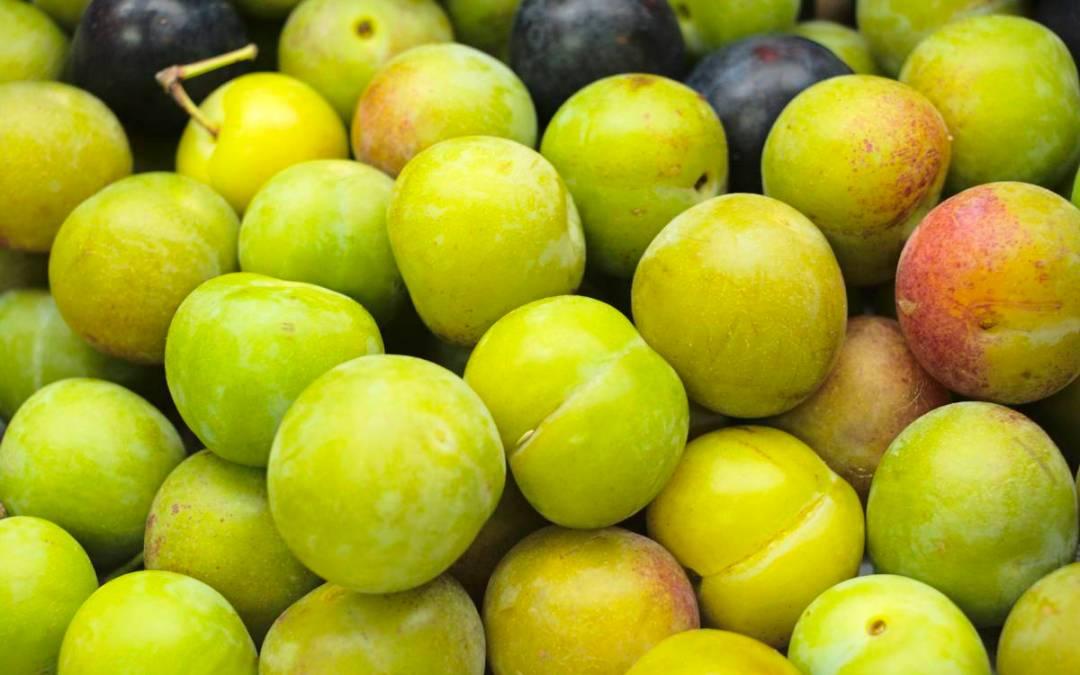 Tempo de Froita!! Mazás de Landín, e ameixas de Narahío!!