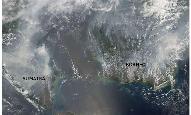 forest_fires_borneo_sumatra