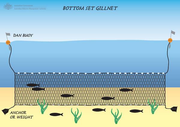 Gilnet (By Oceana)