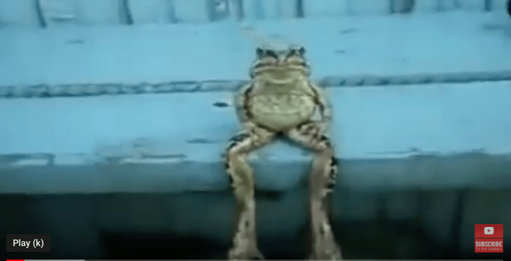 funny frogs video