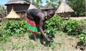 Promotion of food security through Kitchen Gardens