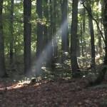 sophrologie marche consciente dans la nature