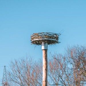 Ooievaarspaal met ooievaarswiel op hoogte. Deze nestkast is op maat gemaakt voor de ooievaar.