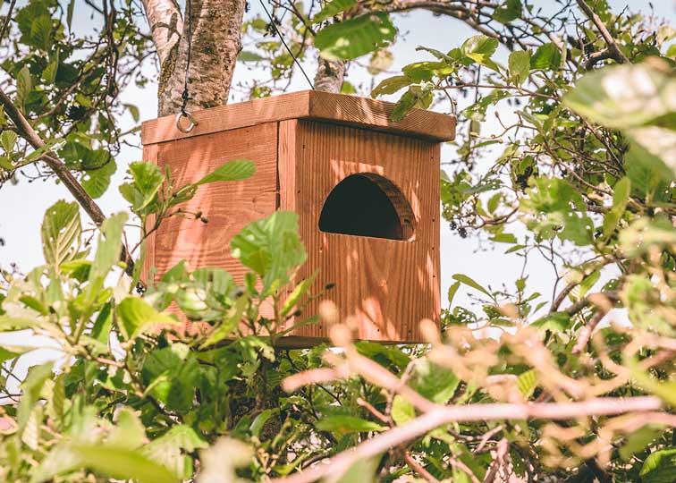 Zwarte roodstaartnestkast, gemaakt uit lariks. Deze nestkast is op maat gemaakt voor de zwarte roodstaart.