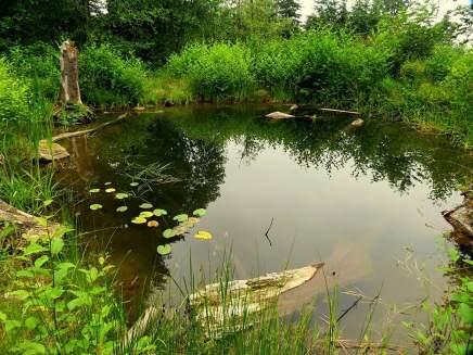 172-Alderleaf-farm-pond-after