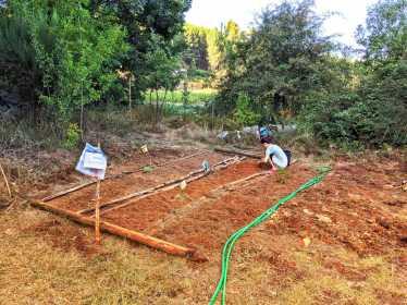 garden 2020 aug.small