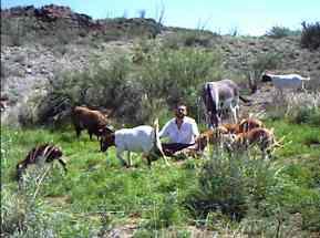 Dan Martin - With Livestock