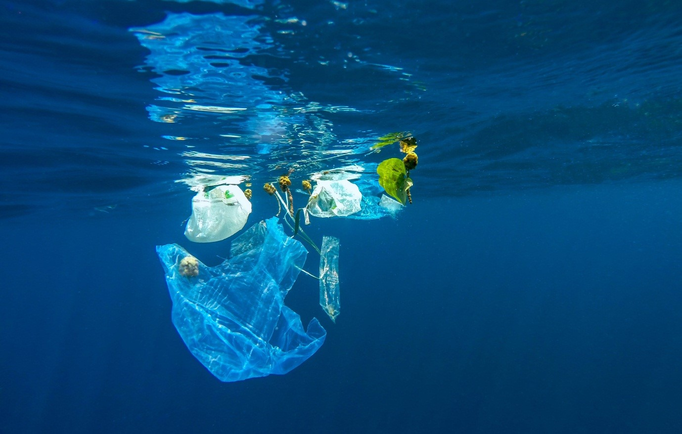 Why not to use single-use plastic, and 14 ways to reduce its consumption