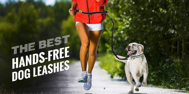 What is the best hands free dog leash?