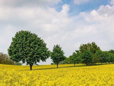 Lidl heeft oog voor milieu en eerlijke producten