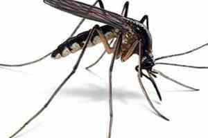 Hoe bescherm ik mezelf tegen muggen op een natuurlijke manier
