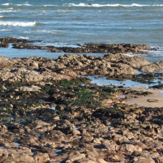rock pools seaweed eyemouth