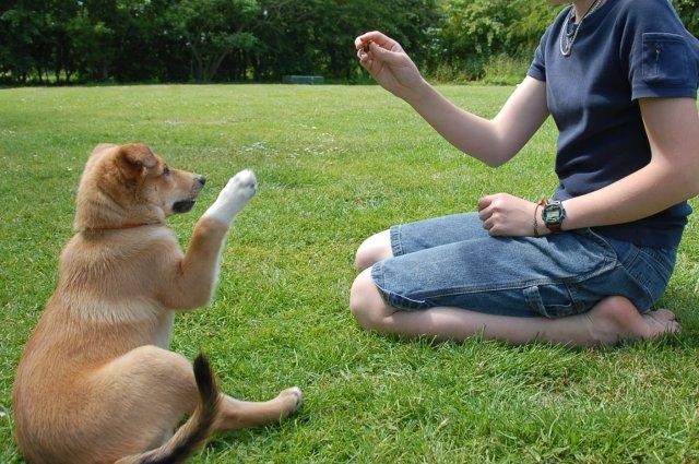 Γιατί ο σκύλος «καβαλάει» το πόδι μας και τους άλλους σκύλους