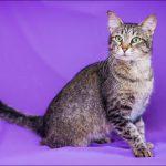 Варшавская мэрия попросила горожан позаботиться о бездомных котах