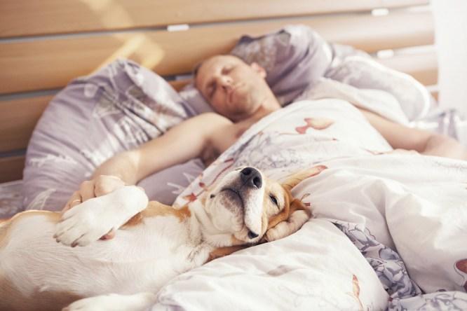 Сон с домашними животными