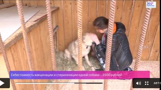Бездомных собак начали чипировать в Подмосковье