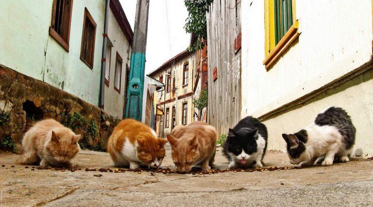 В Варшаве горожане заботятся о бездомных котах