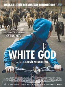 affiche White Dog