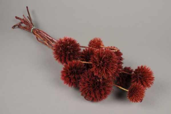 Fleurs séchées - Guadeloupa