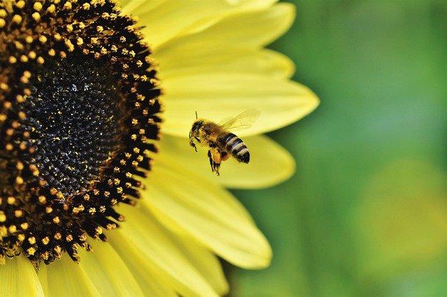 Chroniqueurs et auteurs sont comme la fleur et l'abeille. Indissociable.
