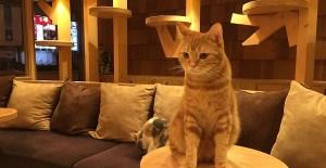 Asyiknya Makan Sambil Main dengan Kucing di 2 Cat Cafe Jakarta Ini