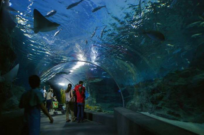 tempat wista di Bangkok terbaik - Siam Ocean World
