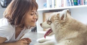 Tertarik Memelihara Anjing? Ini Dia 9 Jenis Anjing yang Cocok Untuk Pemula