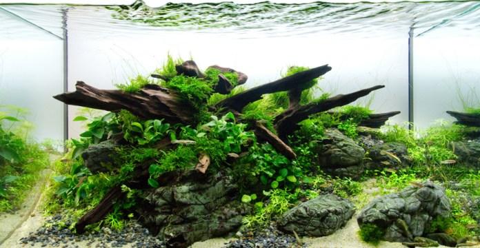 cara membuat aquarium aquascape