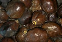 manfaat buah zuriat