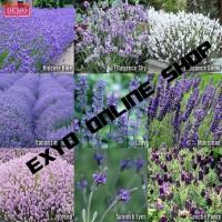 Benih Bunga Lavender Campur 9 Jenis Import UK - Lavender Mix 9 Kinds