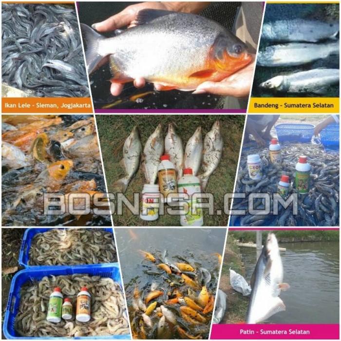 Jual Paket Vitamin Budidaya Ikan Bawal Terlaris Kota Bandung Flyshopp Tokopedia