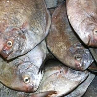 Jual Ikan Bawal Laut Kab Tangerang Rio Olshop Tokopedia