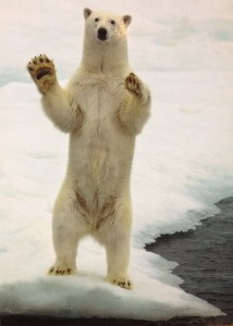 Postcard of a polar bear on its hind legs