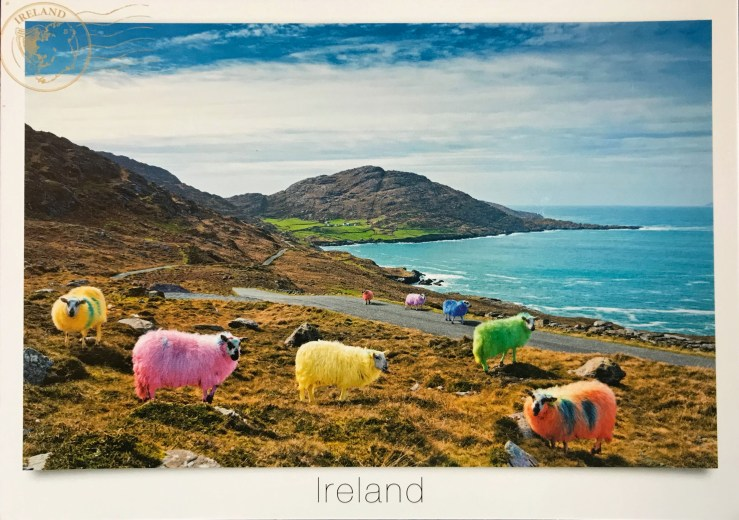 Image of brightly colored sheep grazing near the Ireland coast