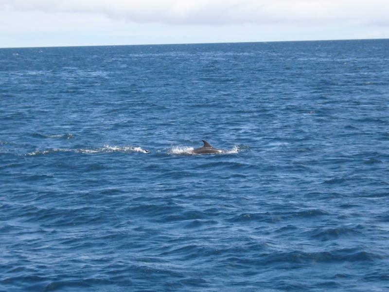 Delfin cerca de la Isla Floreana.