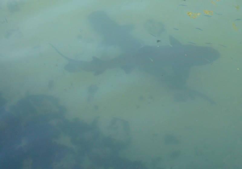 Tiburones en Galápagos.