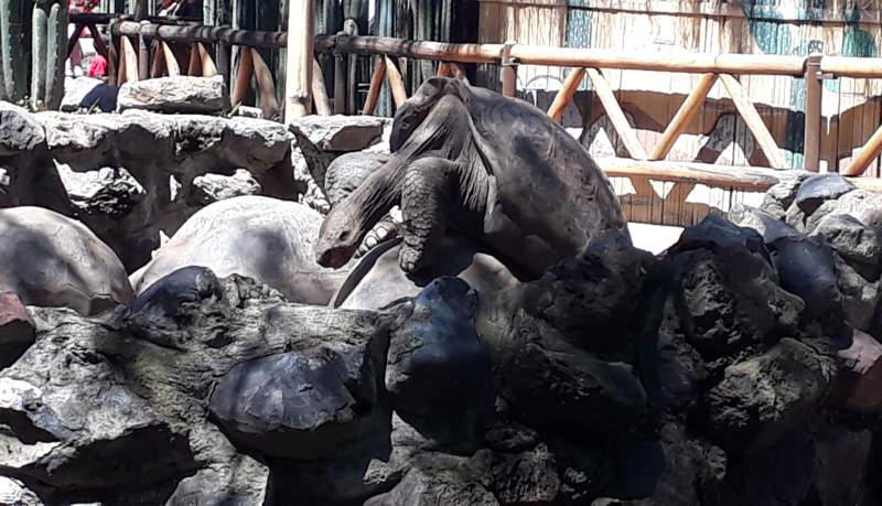 Tortugas en Guayabamba.