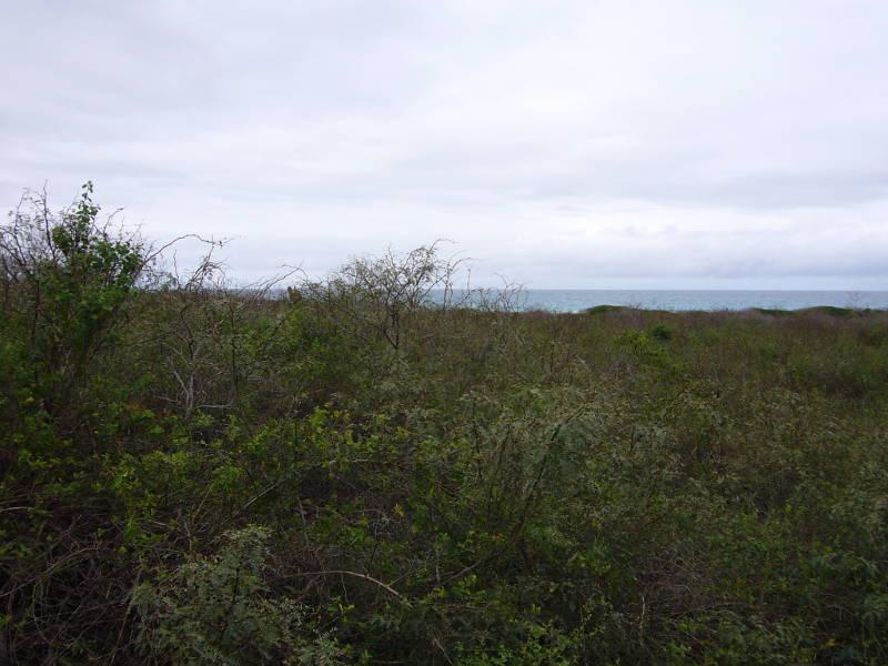 Vegetación al camino a la Bahía.